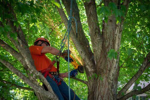 Craigs Tree Service